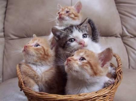 Как выбрать котенка для ребенка
